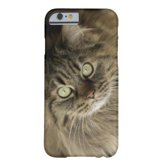 サンタフェ、ニューメキシコ、米国。 メインのあらいぐま猫。 (PR) BARELY THERE iPhone 6 ケース