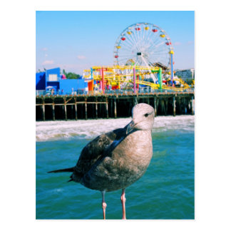 サンタモニカ桟橋の訪問者の郵便はがき ポストカード