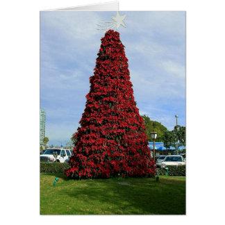 サンディエゴのクリスマスのポインセチアの木 カード