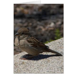 サンディエゴの小さい鳥 カード