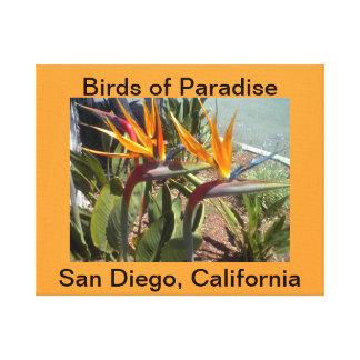 サンディエゴ、CaliforniaCanvas極楽鳥 キャンバスプリント