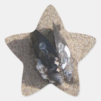サンディベントゥーラのビーチのムラサキ貝 星シール