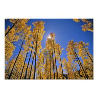 サンファン範囲の秋の《植物》アスペン果樹園の フォトプリント