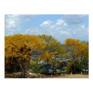 サンフェルナンドの丘のPouiの黄色い木 ポストカード