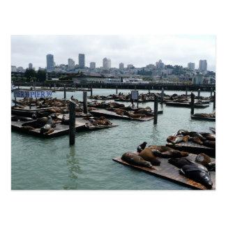 サンフランシスコおよび桟橋39のアシカ都市スカイライン ポストカード