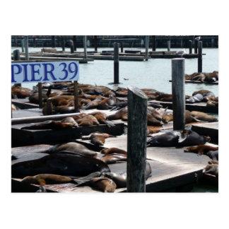 サンフランシスコの桟橋39のアシカ ポストカード