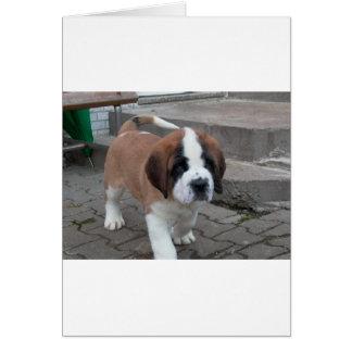 サンベルナール峠の子犬 カード