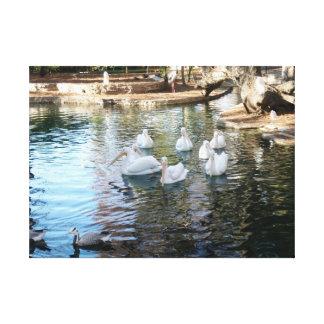 サン・アントニオのアヒルの池 キャンバスプリント