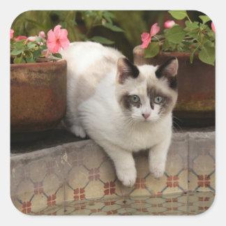 サン・ミゲルdeアジェンデ、メキシコ。 子ネコの残り スクエアシール