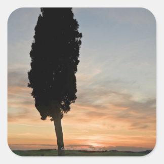 サンQuiricoのd'Orcia、タスカニーの近くの薄暗がりの木 スクエアシール