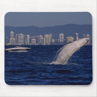 サーファーの楽園を破っているザトウクジラの子牛 マウスパッド