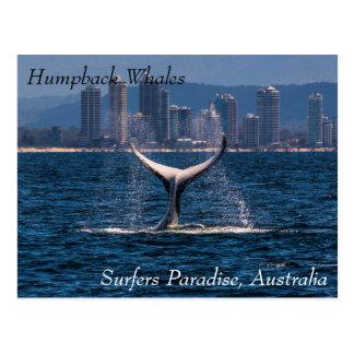 サーファーの楽園を離れたザトウクジラの尾肝蛭 ポストカード