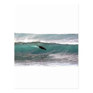 サーフィンのアシカの海洋波 ポストカード