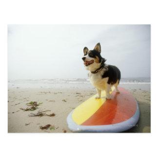 サーフボードの犬 葉書き
