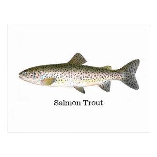 サーモンピンクマスの魚 ポストカード