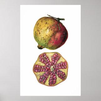 ザクロのフルーツの植物のポスター ポスター