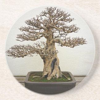 ザクロの盆栽の木 コースター