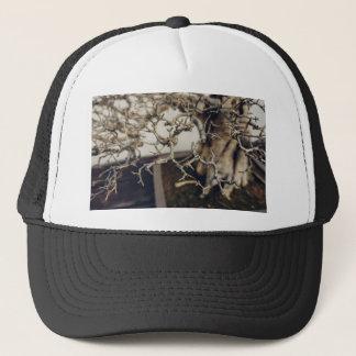 ザクロの盆栽の枝 キャップ