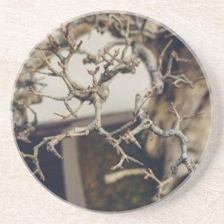 ザクロの盆栽の枝 コースター