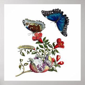 ザクロの蝶 ポスター