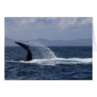 ザトウクジラの尾しぶき カード