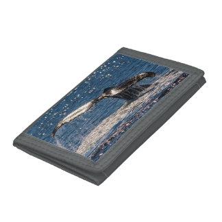 ザトウクジラの尾肝蛭のサーファーの楽園