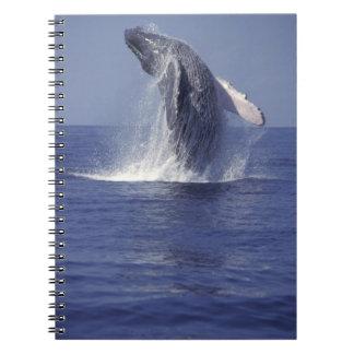 ザトウクジラの破ること(Megaptera ノートブック