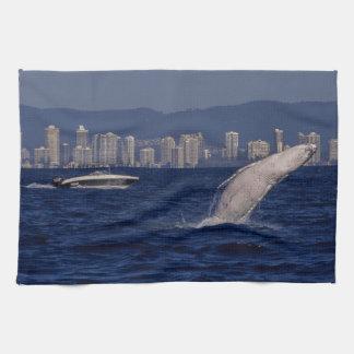ザトウクジラの違反のサーファーの楽園オーストラリア キッチンタオル