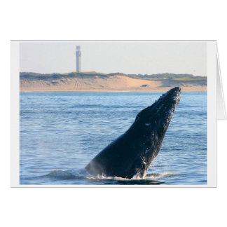 ザトウクジラの違反 カード