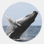 ザトウクジラ 丸形シール・ステッカー