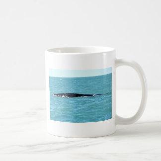 ザトウクジラWHITSUNDAYクイーンズランドオーストラリア コーヒーマグカップ