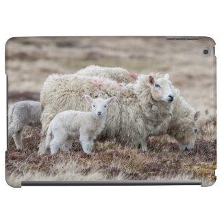 シェトランド諸島のヒツジ2 iPad AIRケース