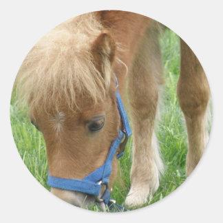 シェトランド諸島子馬のステッカー ラウンドシール