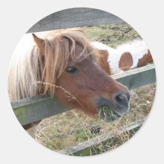 シェトランド諸島子馬のステッカー(5019) ラウンドシール
