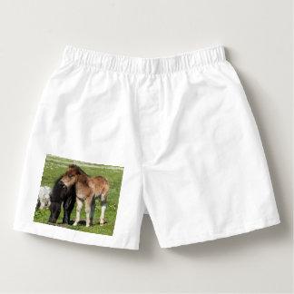 シェトランド諸島子馬の子馬の人の下着 ボクサー