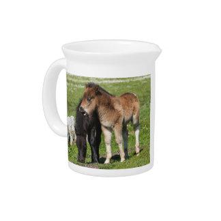 シェトランド諸島子馬の子馬の水差し ピッチャー