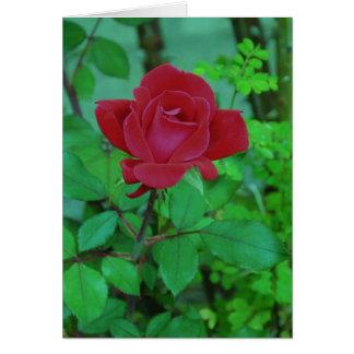 シェリー酒のリンの赤いバラ カード