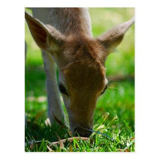 シカのカモシカのための環境にやさしいことをしよう ポストカード