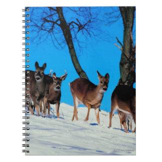 シカの群れ ノートブック