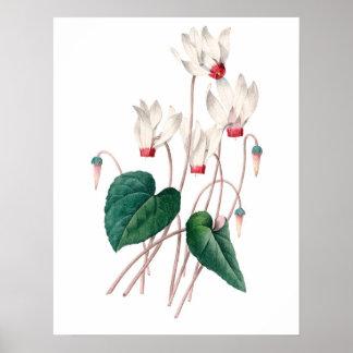 シクラメンの植物の優れた質のプリント ポスター