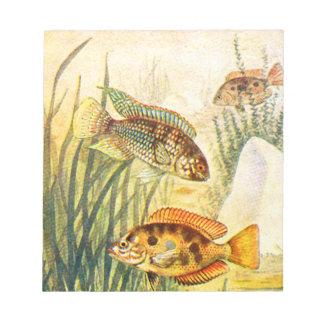 シクリッド魚 ノートパッド