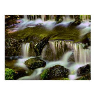 シダの春、ヨセミテ国立公園、カリフォルニア ポストカード