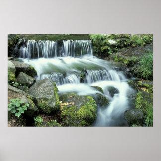 シダの春、ヨセミテ国立公園 ポスター