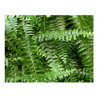 シダの葉状体Iの緑の自然 ポストカード