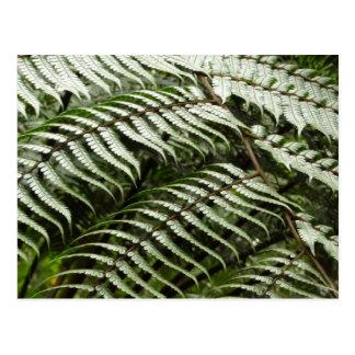 シダの葉状体IIの深緑色の自然 ポストカード
