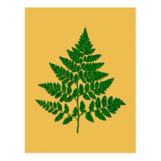 シダの葉 ポストカード