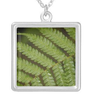 シダの詳細、Mindoの雲の森林から、 シルバープレートネックレス