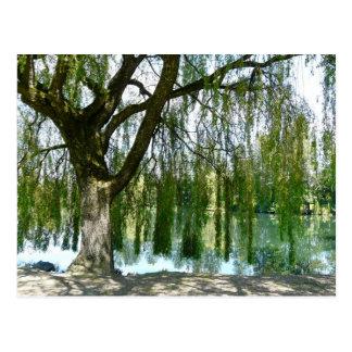 シダレヤナギの木を通した池 ポストカード
