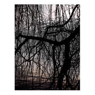 シダレヤナギの木 ポストカード