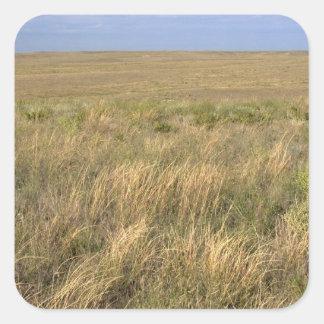 シドニー、ネブラスカの東の牧草地の草原 スクエアシール